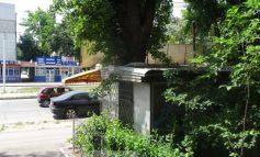 Copacul care iese prin acoperișul unui magazin din Galați (foto)