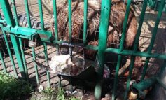 Am aflat că la Zoo Galați este bine să fii urs
